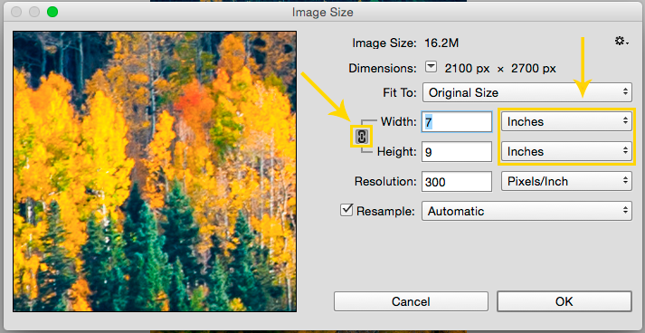 How to View a Photo at Print Size: Confirm the lock aspect ratio icon is enabled and dimensions are displayed in inches